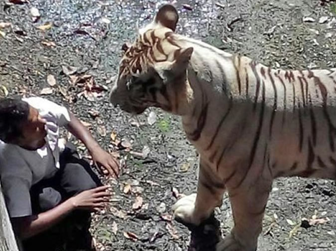 Man mauled to death by tiger in zoo
