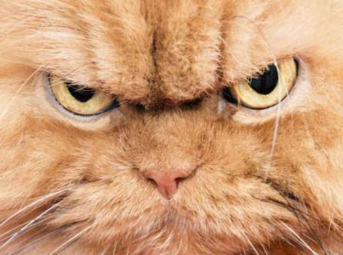 Couple call police after being 'held hostage' by their cat