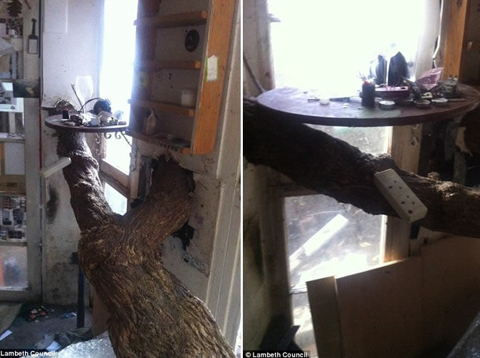 Rogue landlord rents out squalid house with tree growing indoors: Pictures