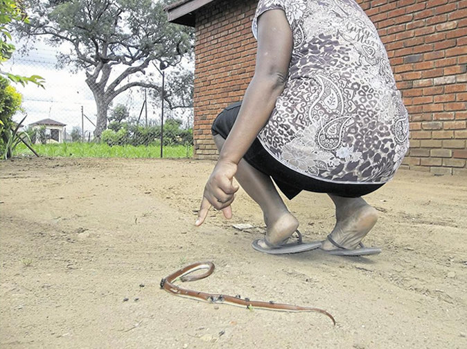 'Magical' snakes invade family home