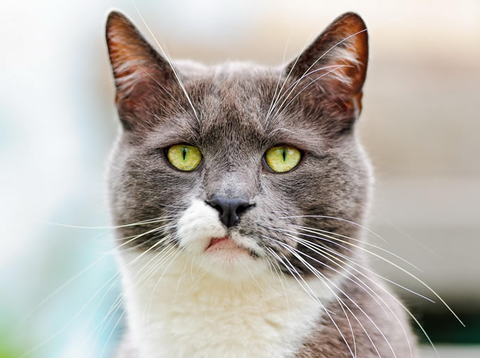 Cat eats man's bacon, he calls 999 to get cat and his girlfriend arrested
