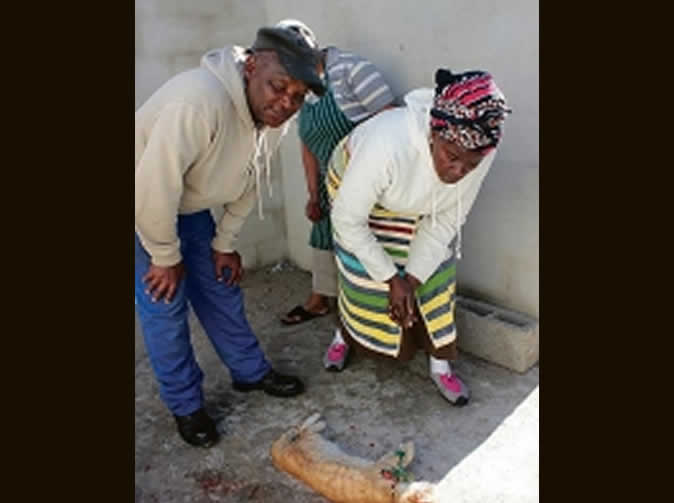 Witchcraft suspected as traditional healer finds mysterious dead cat in home