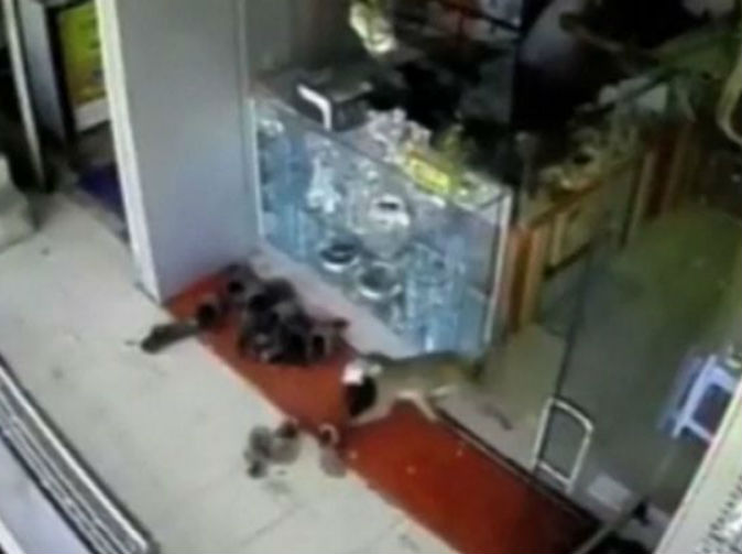 Monkey robs jewellery shop of £100