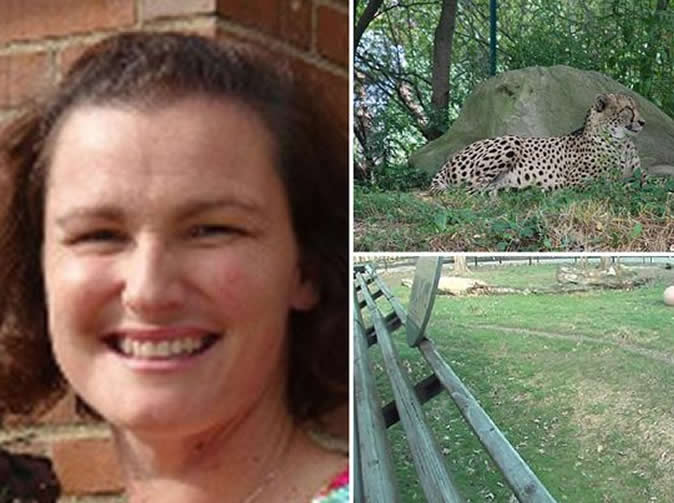Mum throws 2-year-old son into zoo's cheetah enclosure