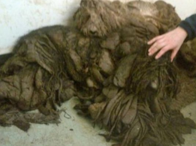 Abandoned dogs found so abused they are unable to see or stand
