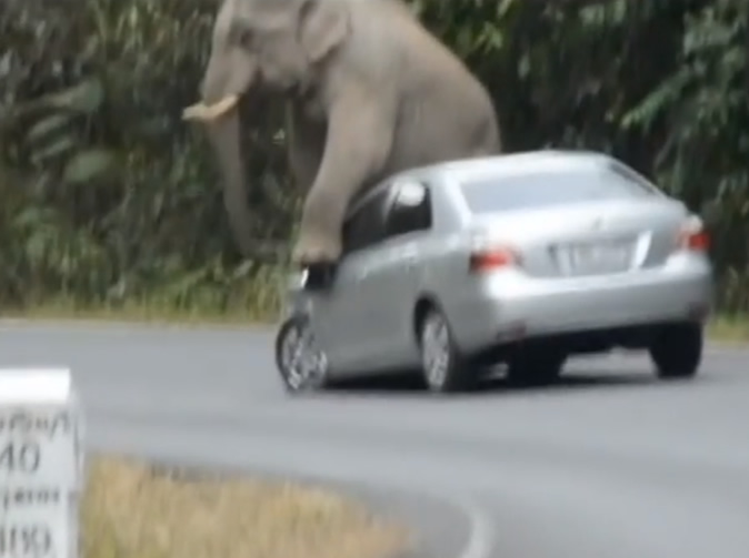 Elephant caught on camera 'mating with cars'