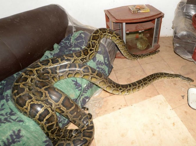 Man explains why he lives in house full of snakes