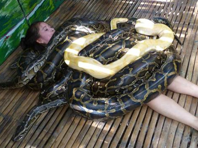 Free and bizarre massage involving deadly snakes: Picture