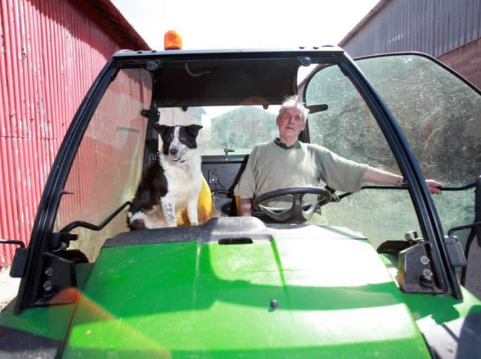 Dog drives tractor onto motorway