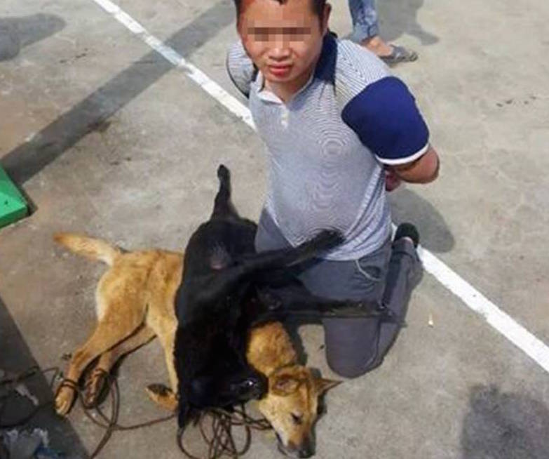 Thieves bashed for stealing and killing dogs