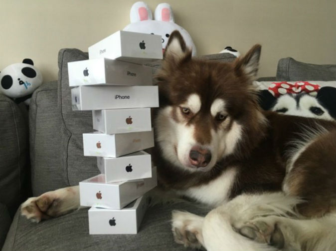 Spoiled dog gets eight iPhone 7s on release day