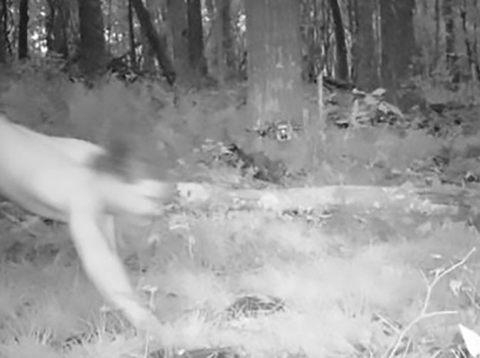 Hidden camera catches man high on LSD thinking he's a tiger