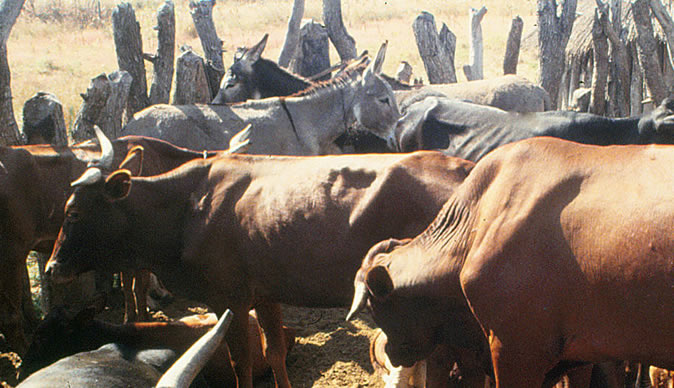 Man (56) sentenced to 12 years in prison for stock theft
