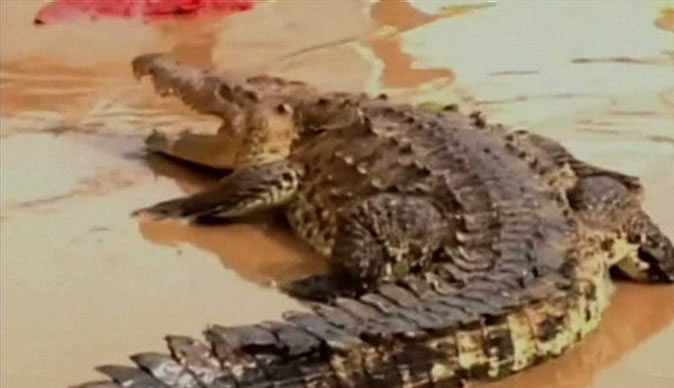 Mexico flood victims battle crocodile spotted in floodwater