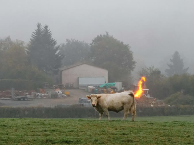 Farting cows blow up barn