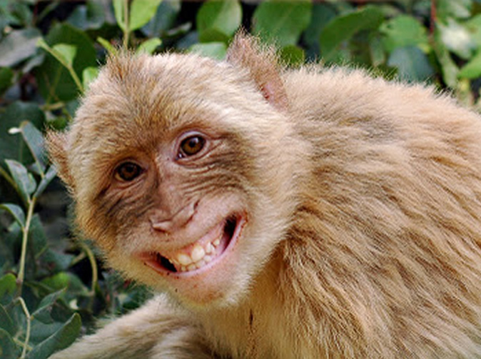 Traditional healer disappears over monkey blood promise