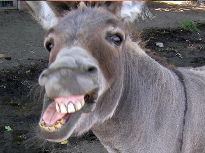 Teen caught raping family donkey