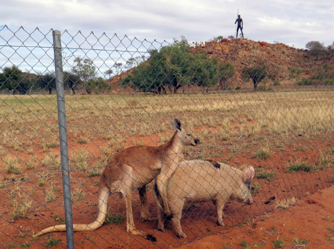 Pig and kangaroo in sexual relationship for a year