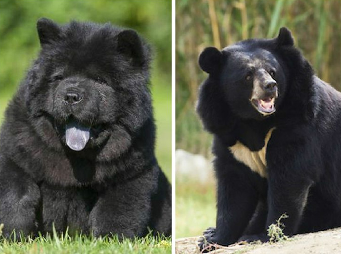Man fails to realise pet 'dogs' are actually black bears