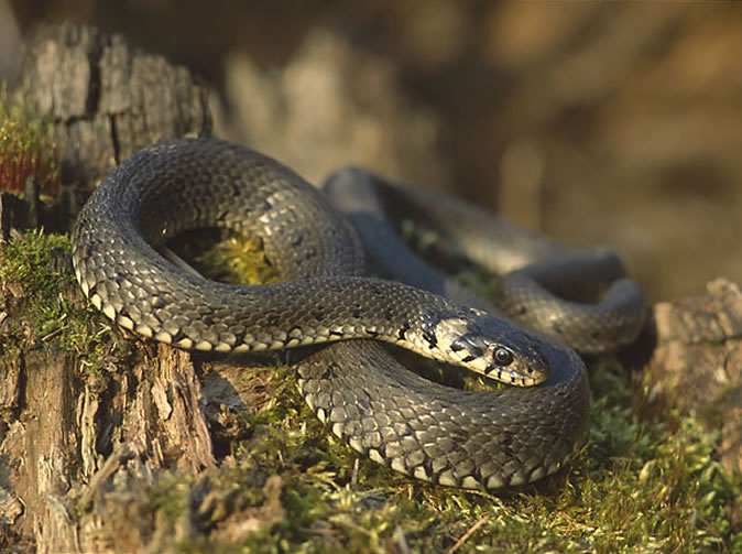 Man facing prison after being bitten by poisonous snake