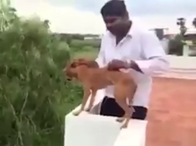 Cruel man throws dog off tall building